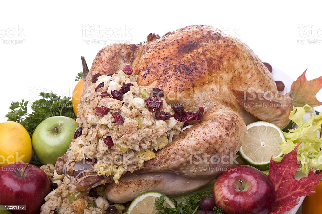 Turkey (XL) royalty-free stock photo