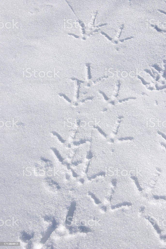 Turkey Tracks in Snow stock photo