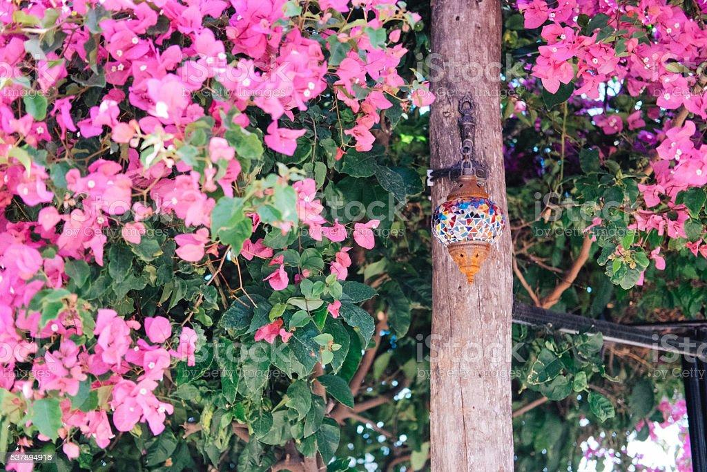 Turkish lamp under bougainvillea tree stock photo