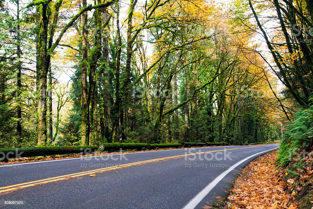 Turn in road in autumn forest with fallen leaves stock photo