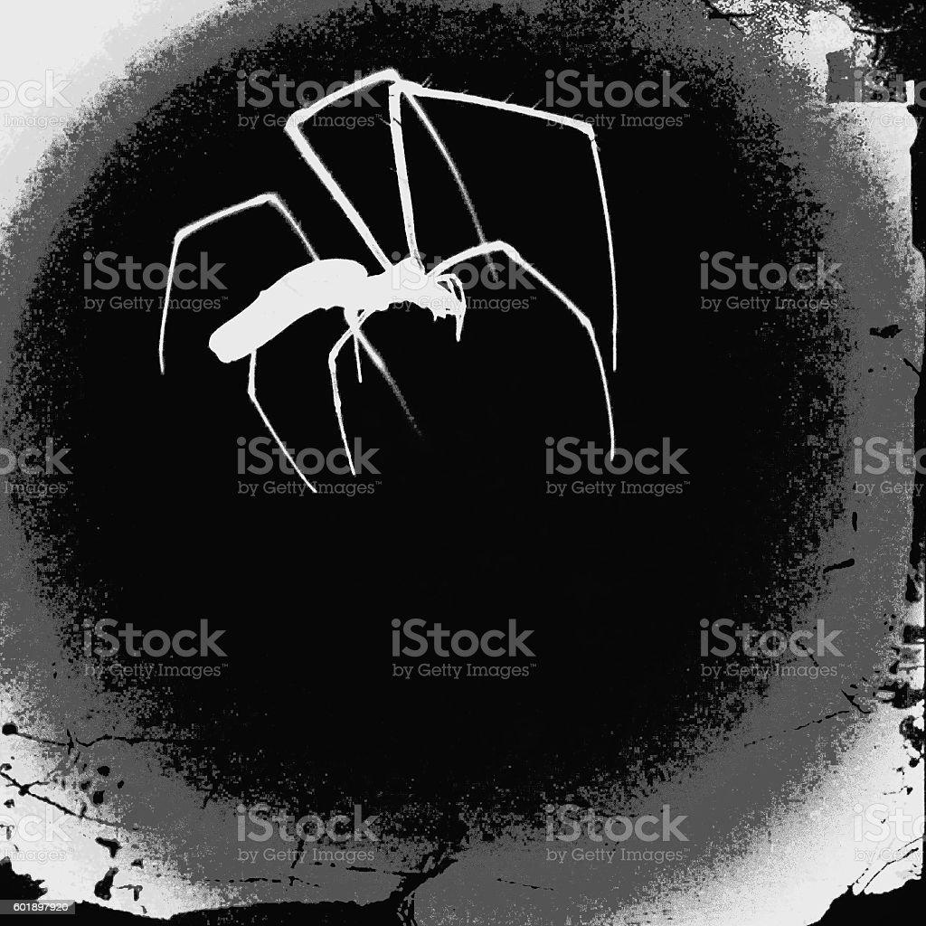 turnaround effect spider stock photo