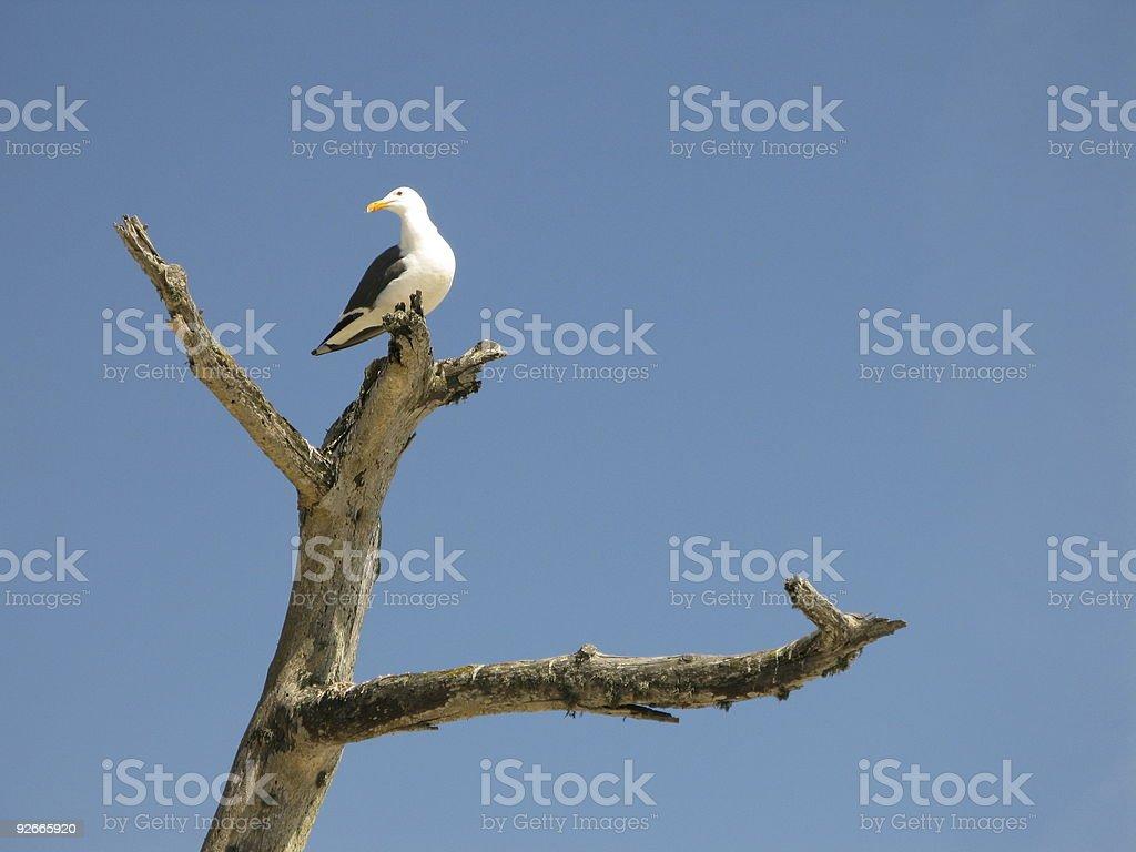 Turning Gull stock photo