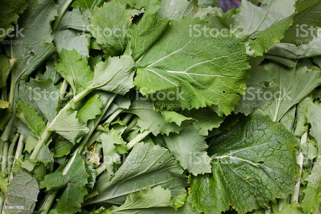 Turnip greens in market stock photo