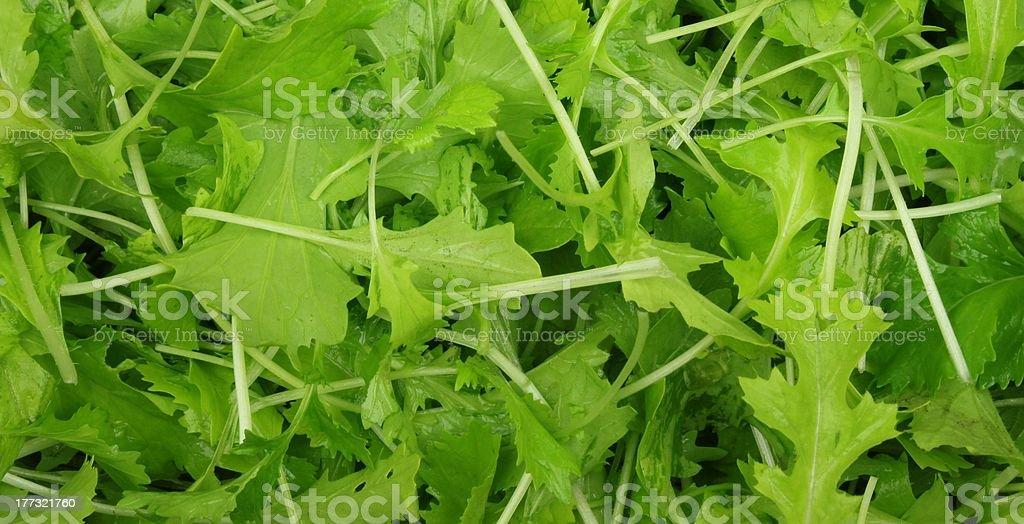 Turnip Leaves royalty-free stock photo