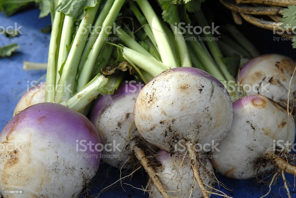 Turnips royalty-free stock photo
