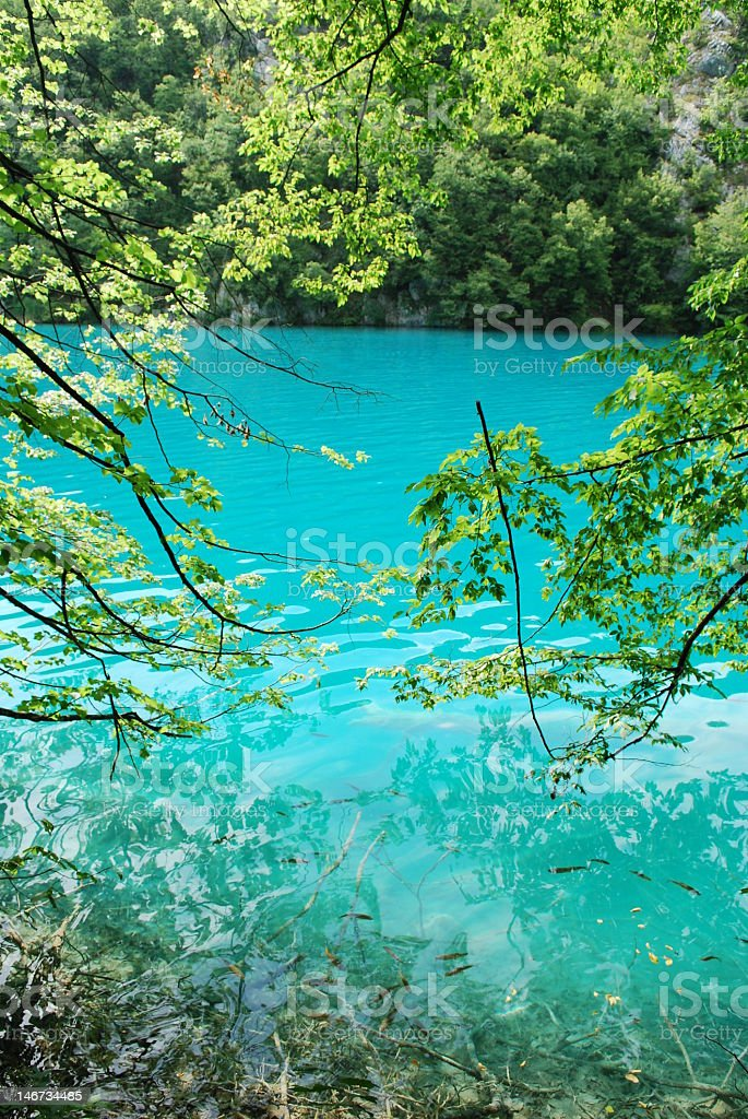 turquise lake in the forest royalty-free stock photo