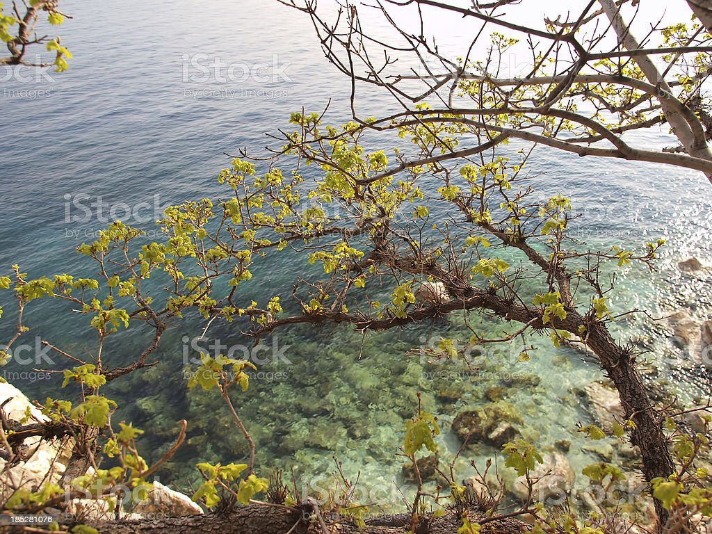 Turquoise Adriatic stock photo