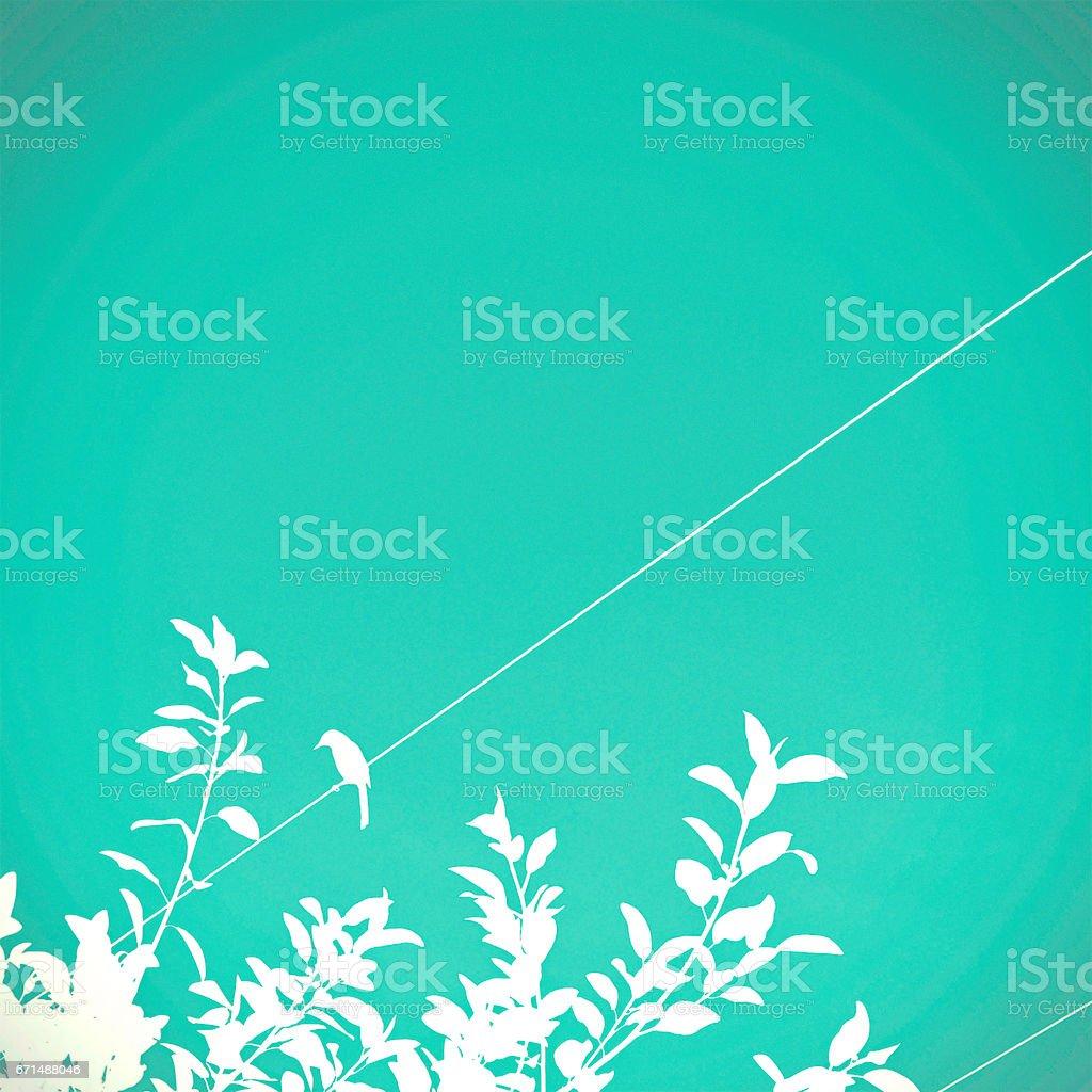 Turquoise Bird Background stock photo