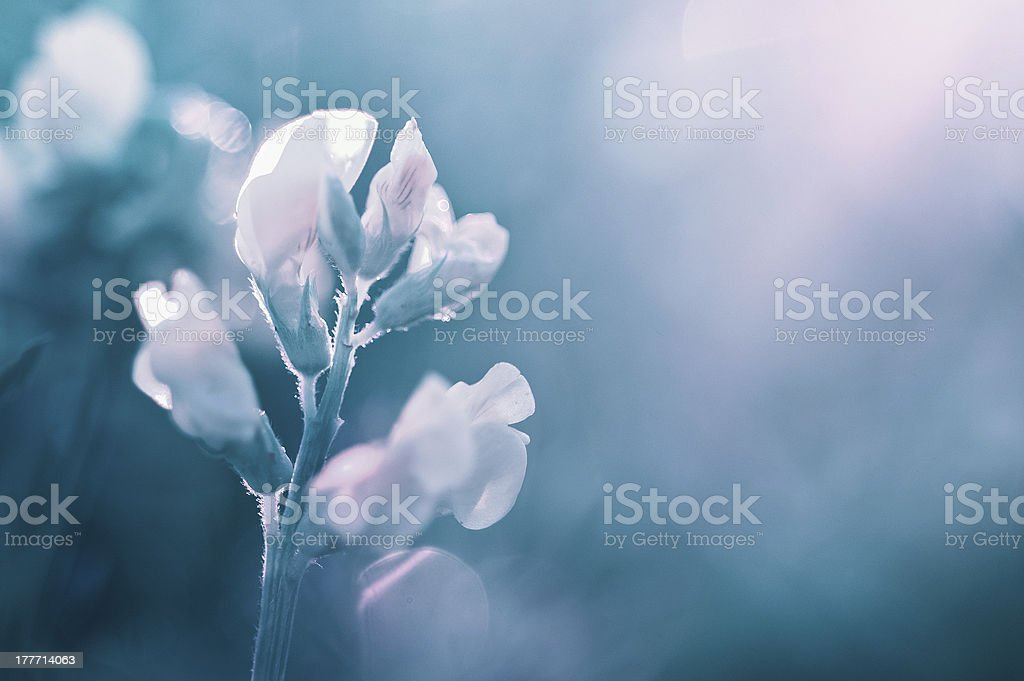 Turquoise flower royalty-free stock photo
