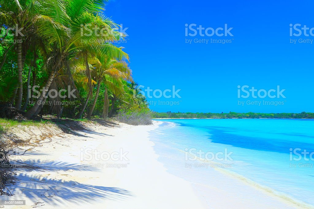 Turquoise moored beach, palm trees –  Punta Cana caribbean tropical paradise stock photo