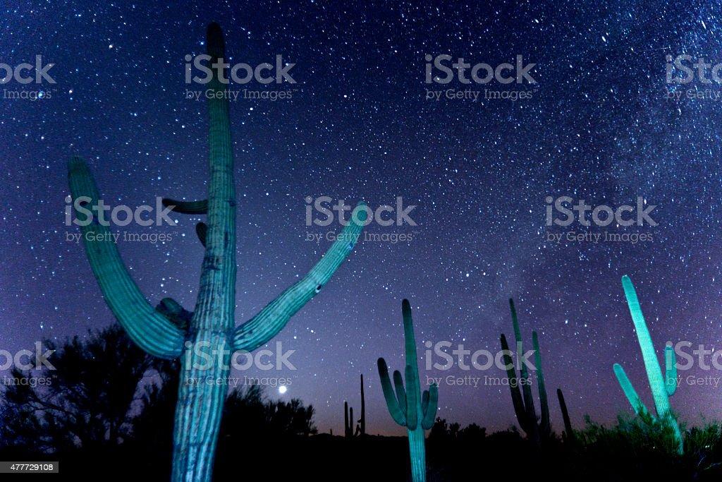 Turquoise Saguaro Night stock photo