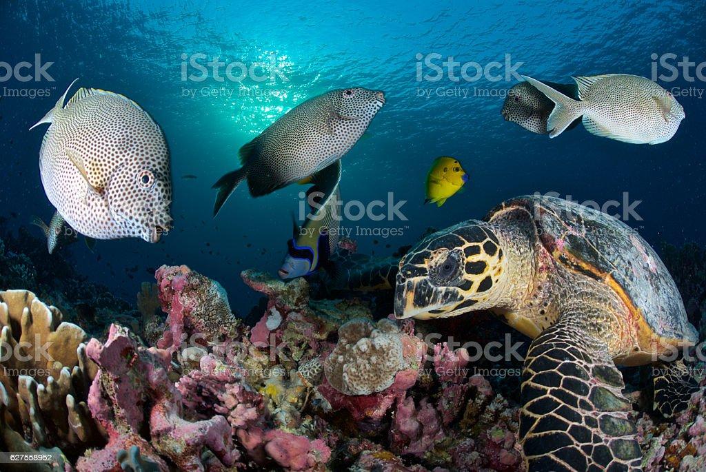 turtle and fish stock photo