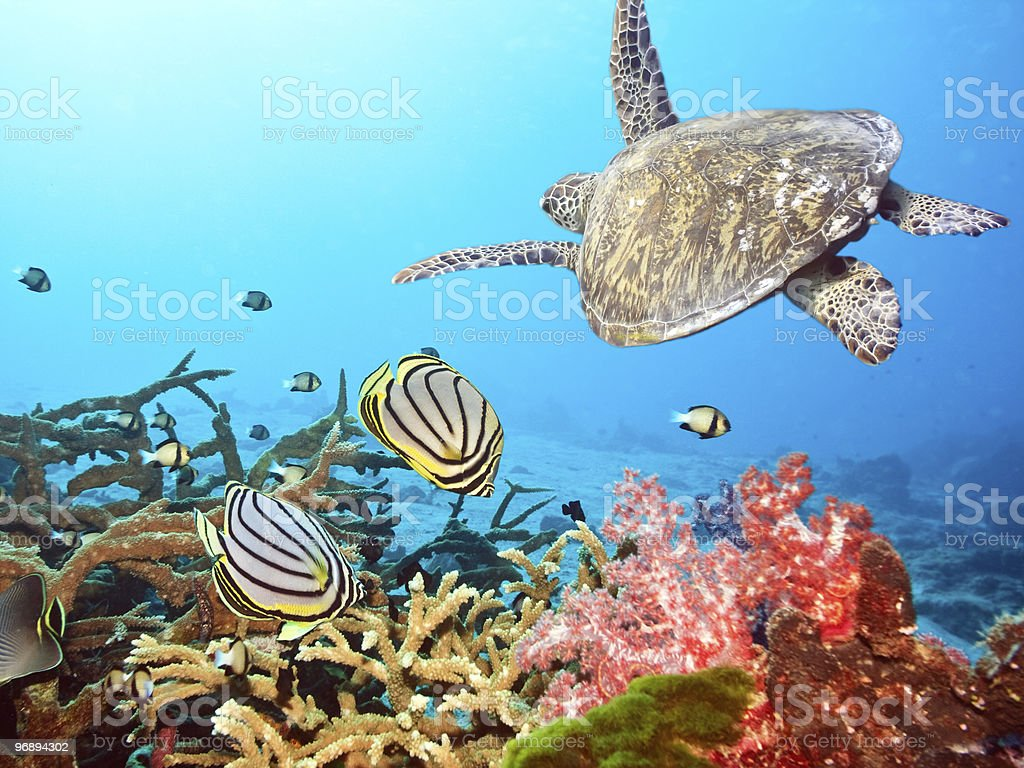 Turtle and fishes stock photo