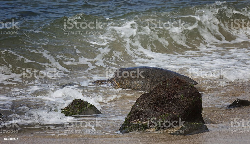 Turtle and wave stock photo