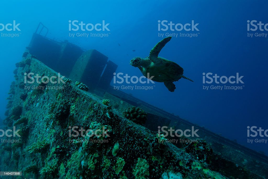 Turtle and wreck stock photo