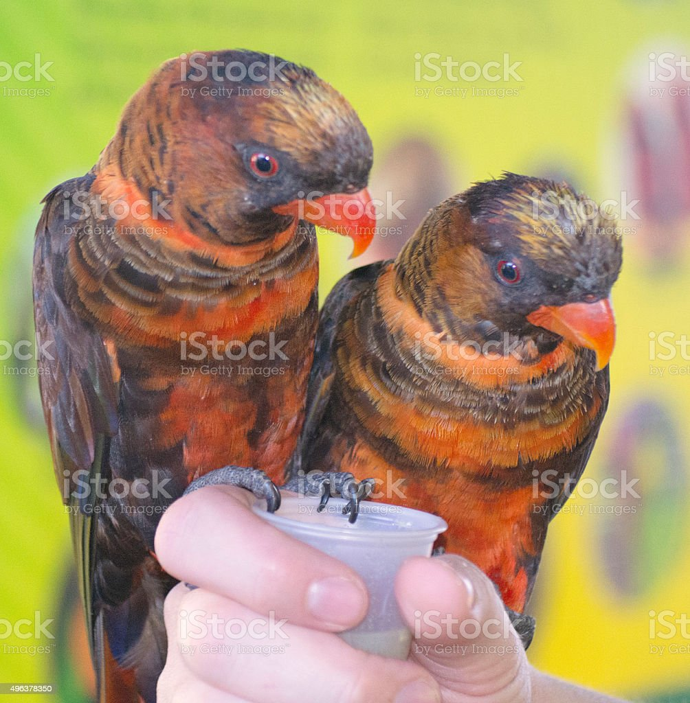 Turtle Bay Birds stock photo
