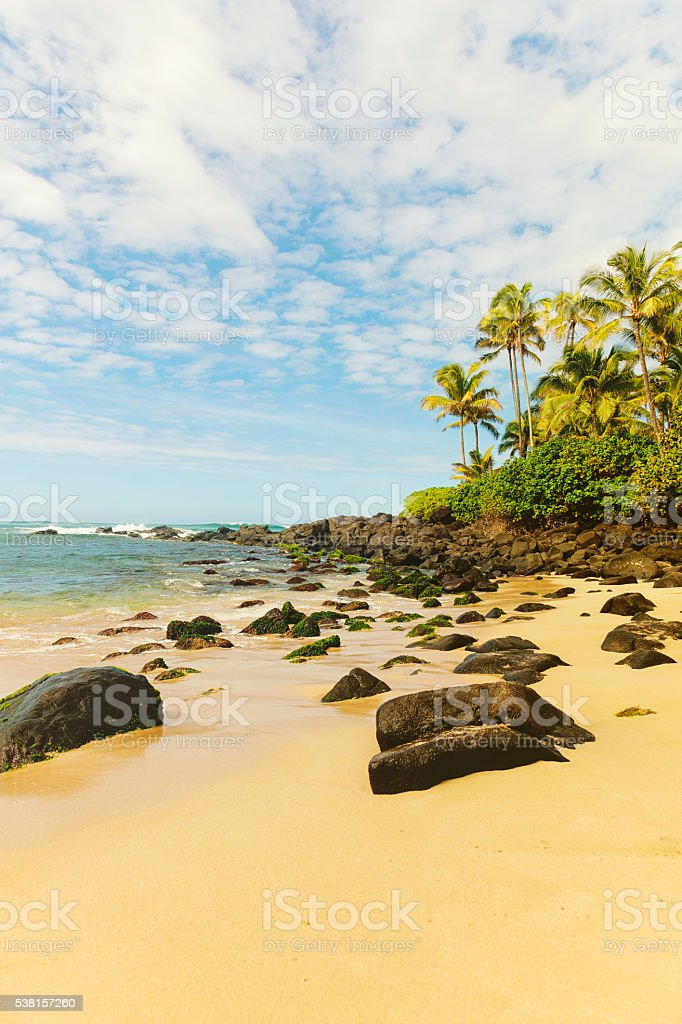 turtle beach, hawaii islands stock photo