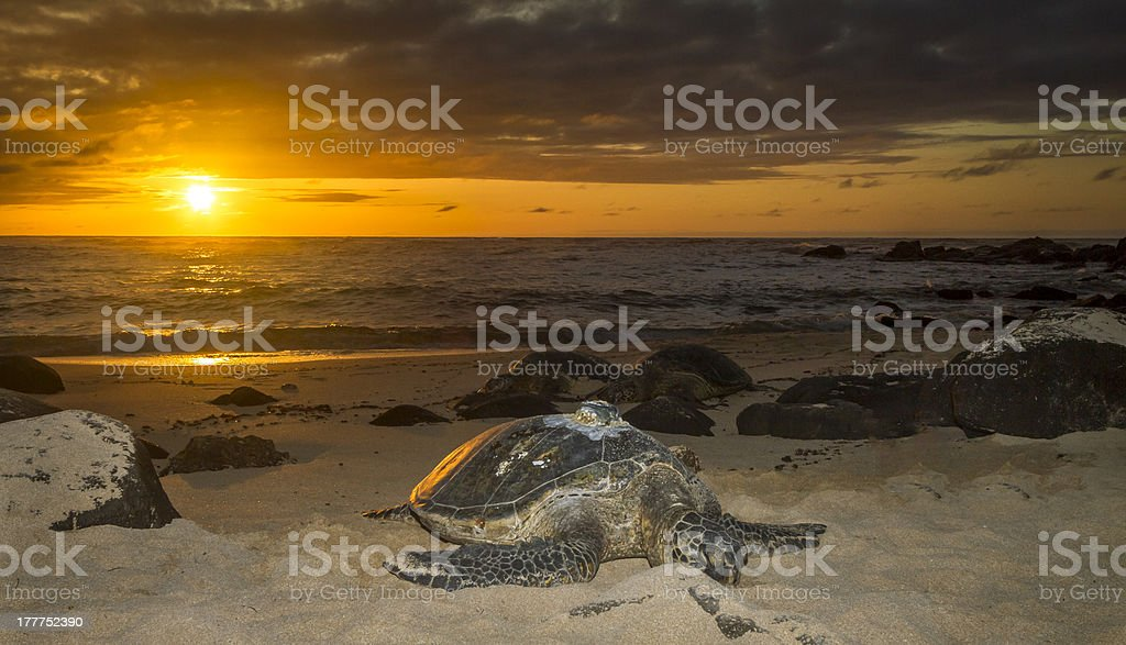 Turtle Beach sunset, Oahu, Hawaii stock photo