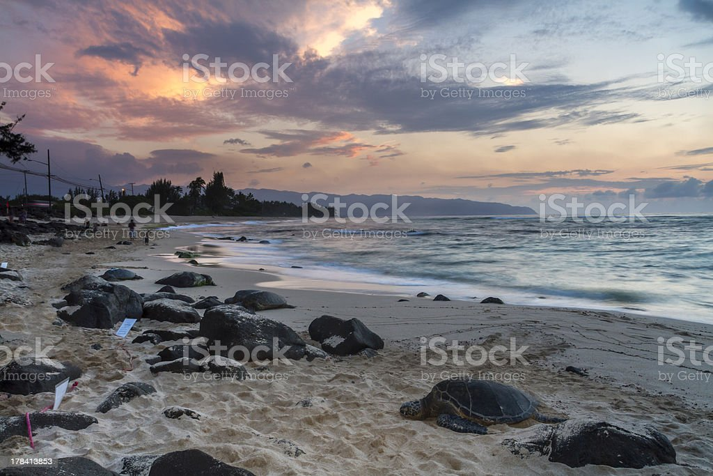 Turtle Beach sunset, Oahu, Hawaii royalty-free stock photo