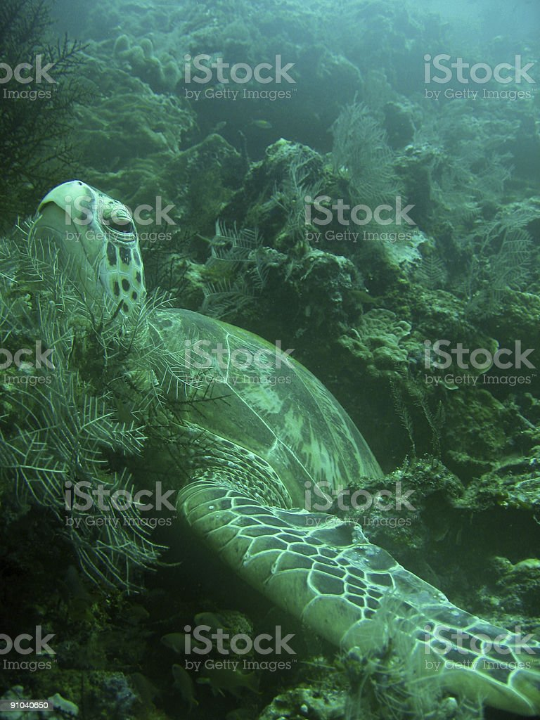 turtle bed royalty-free stock photo