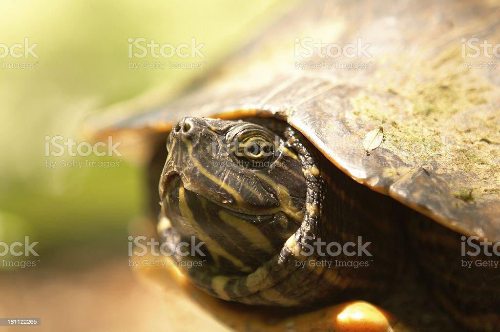 Turtle Breath 5 stock photo