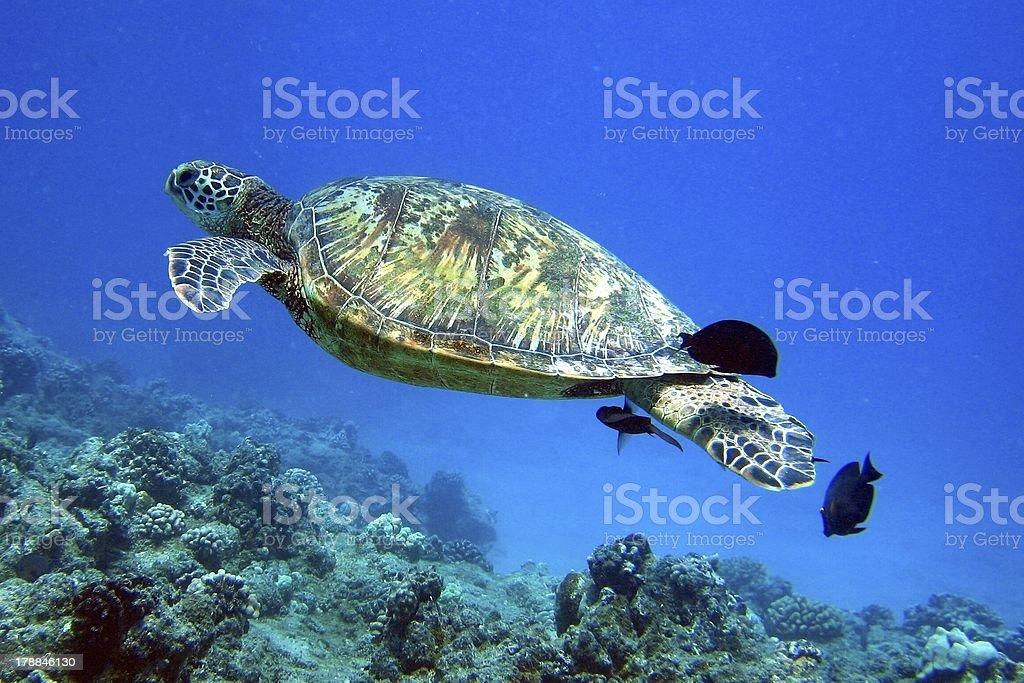 Turtle Canyon stock photo