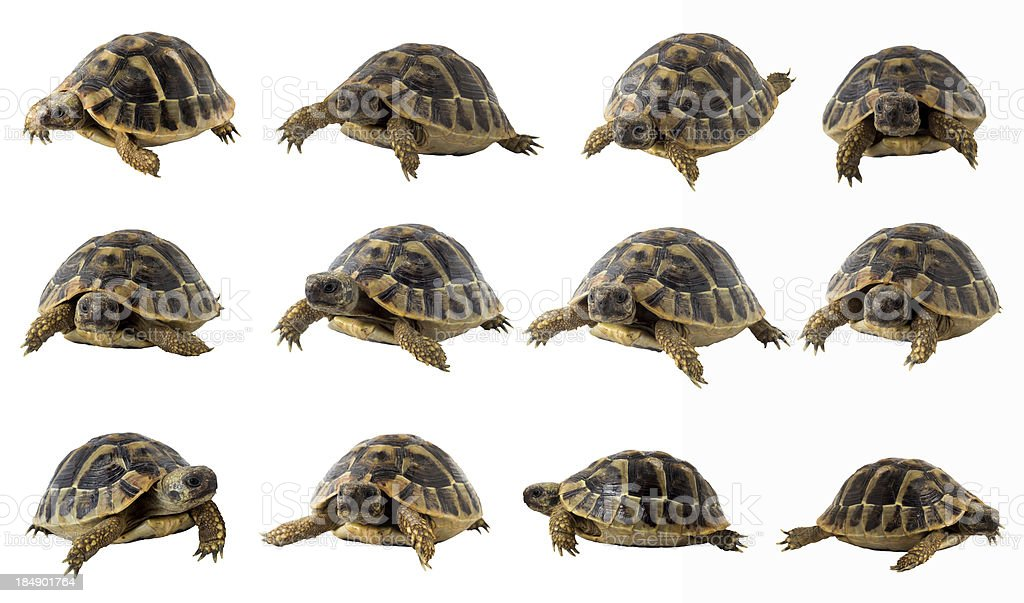turtle collection stock photo