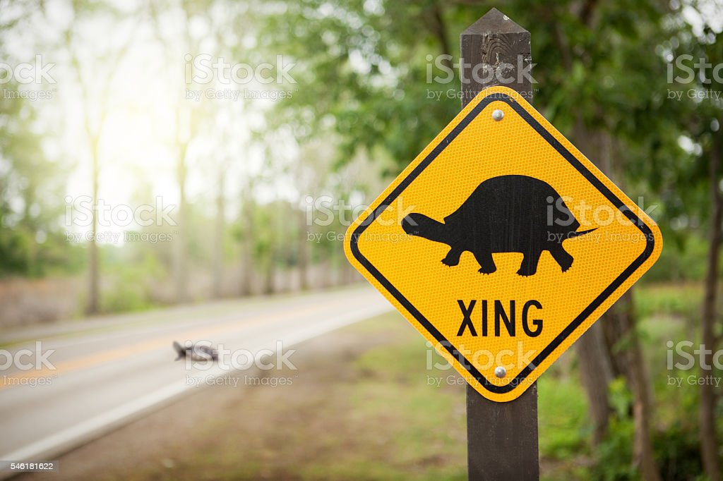 Turtle Crossing stock photo