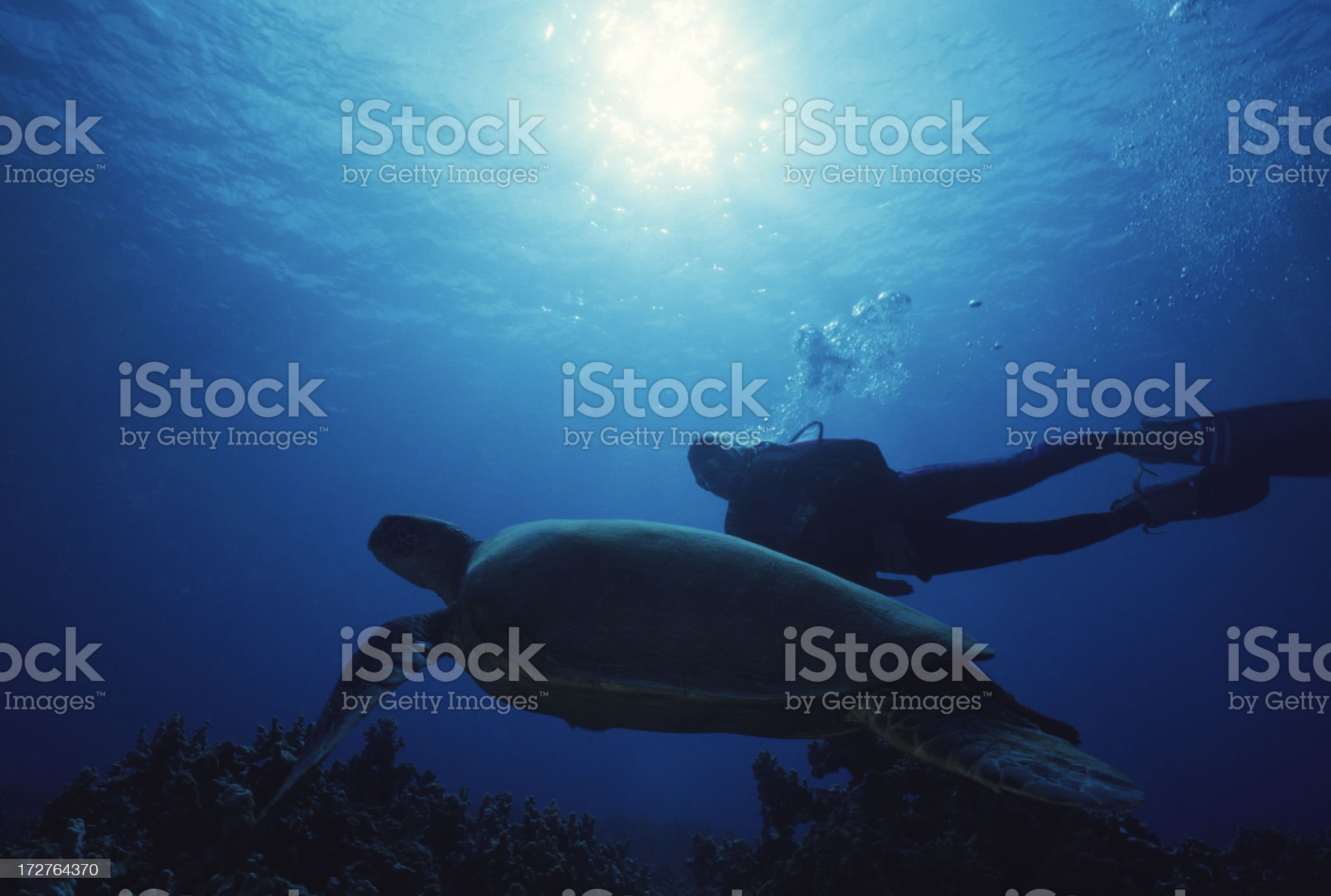 Turtle & Diver royalty-free stock photo