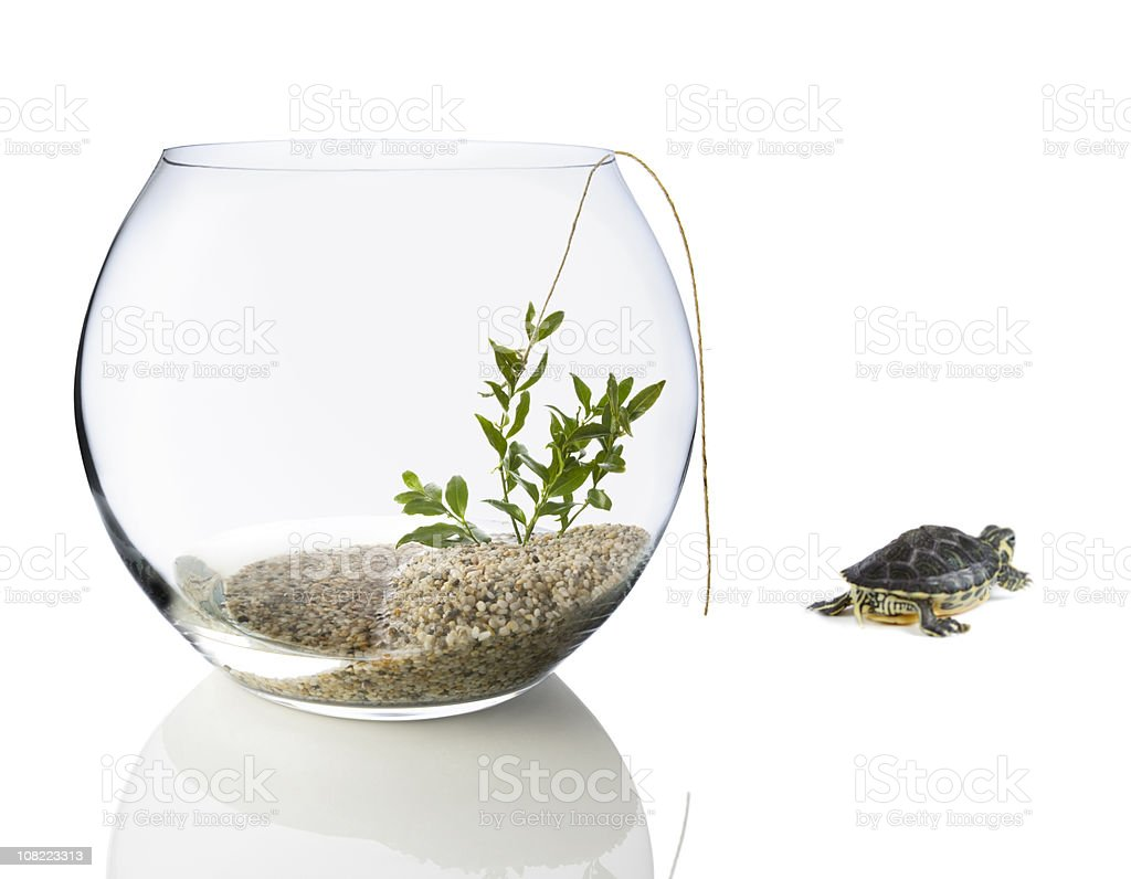 Turtle Escaping Fishbowl royalty-free stock photo