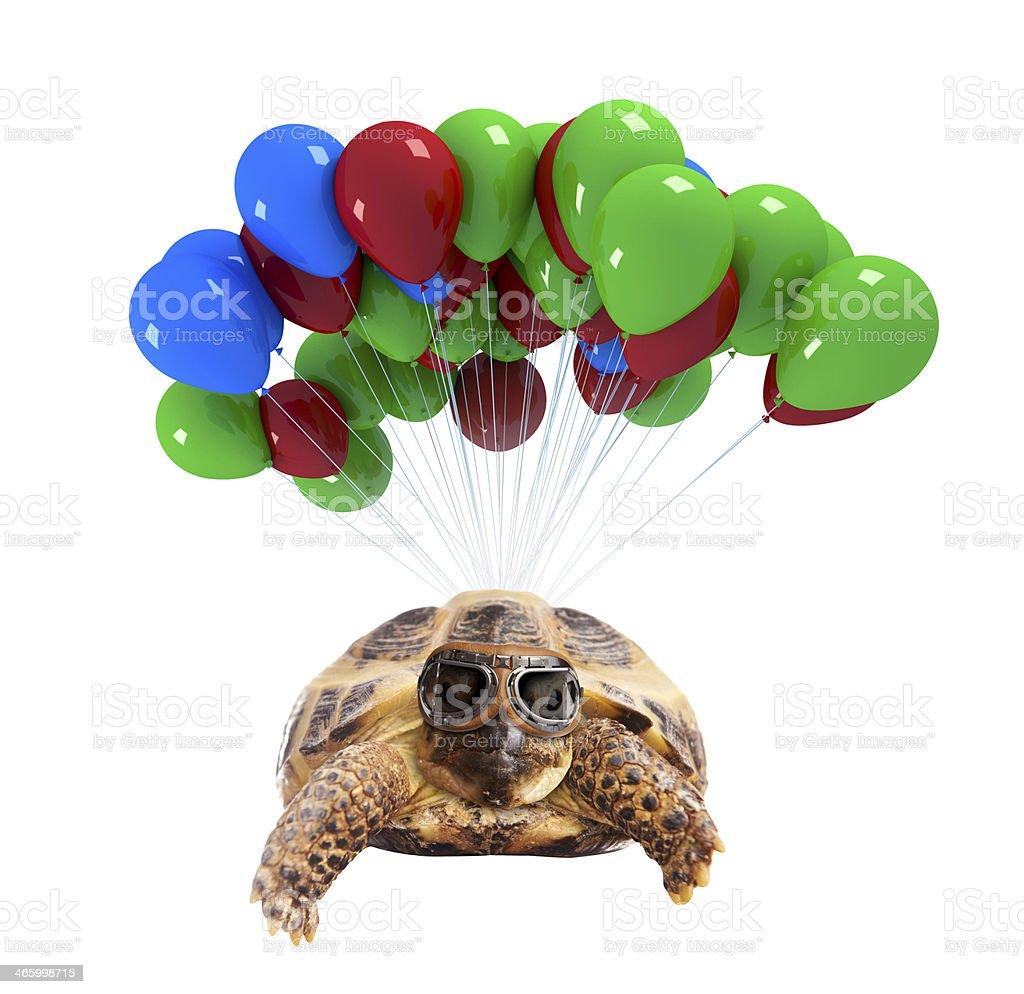 Turtle flying on balloons stock photo
