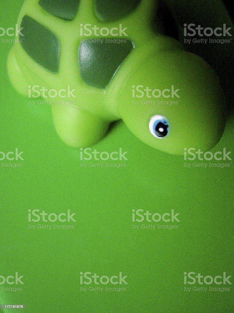 Turtle Green royalty-free stock photo
