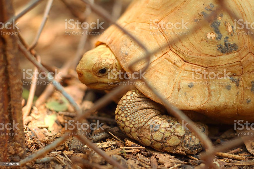 Turtle in captivity at a zoo stock photo