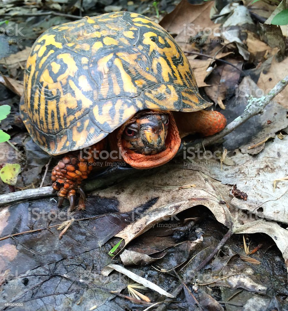 Turtle in forest stock photo