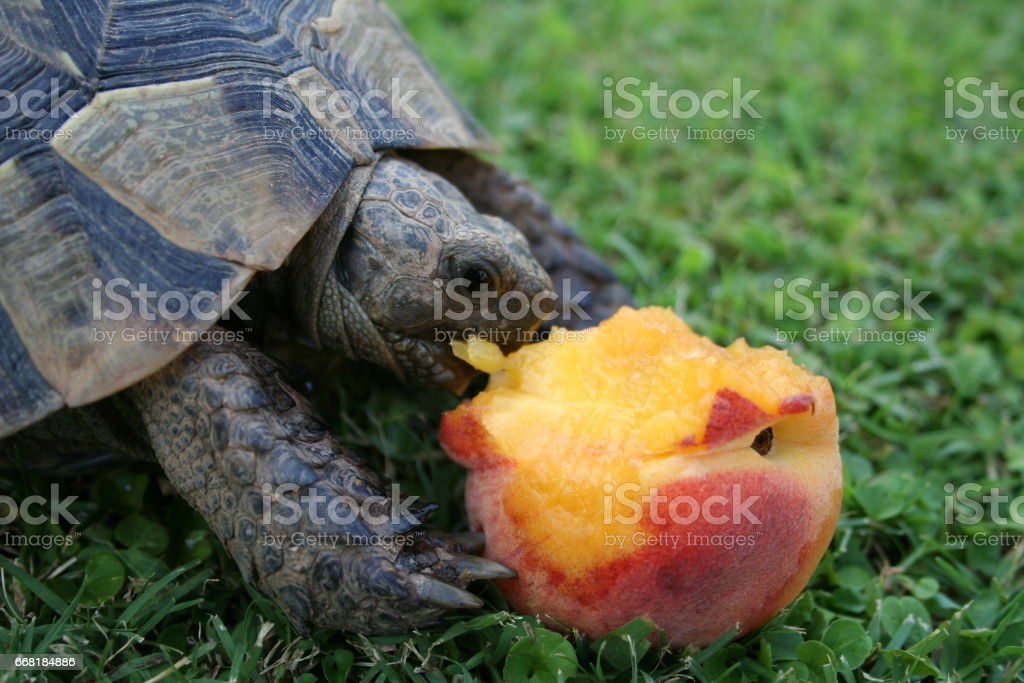 A turtle in grass stock photo