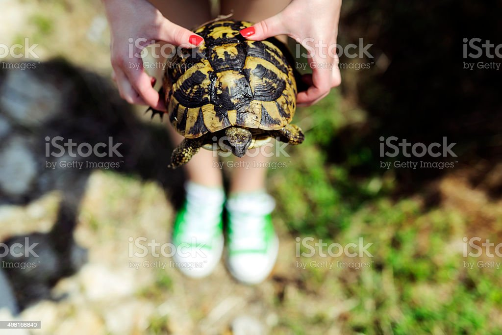 turtle in woman hands stock photo