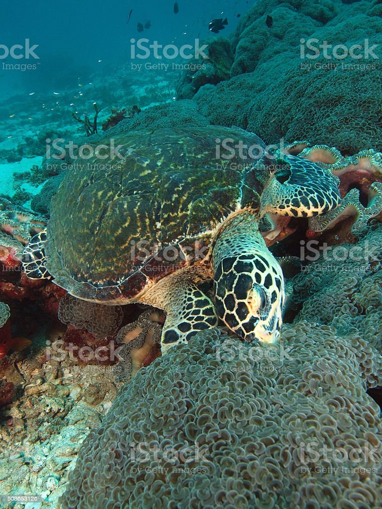 Turtle is eating stock photo