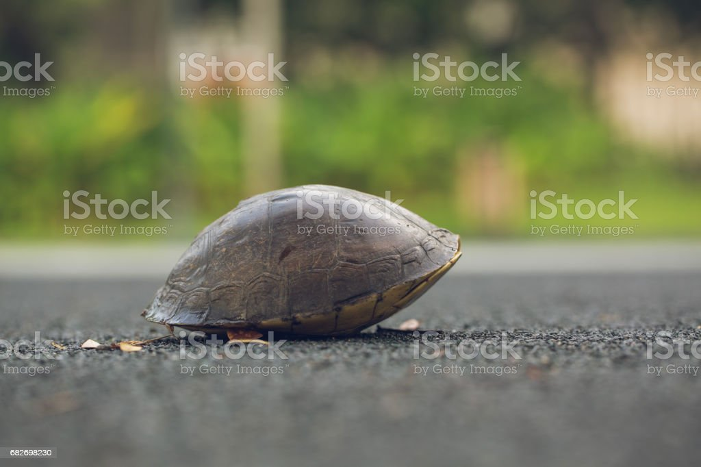 Turtle is shy inside shell on the floor. Animal abstract background. stock photo