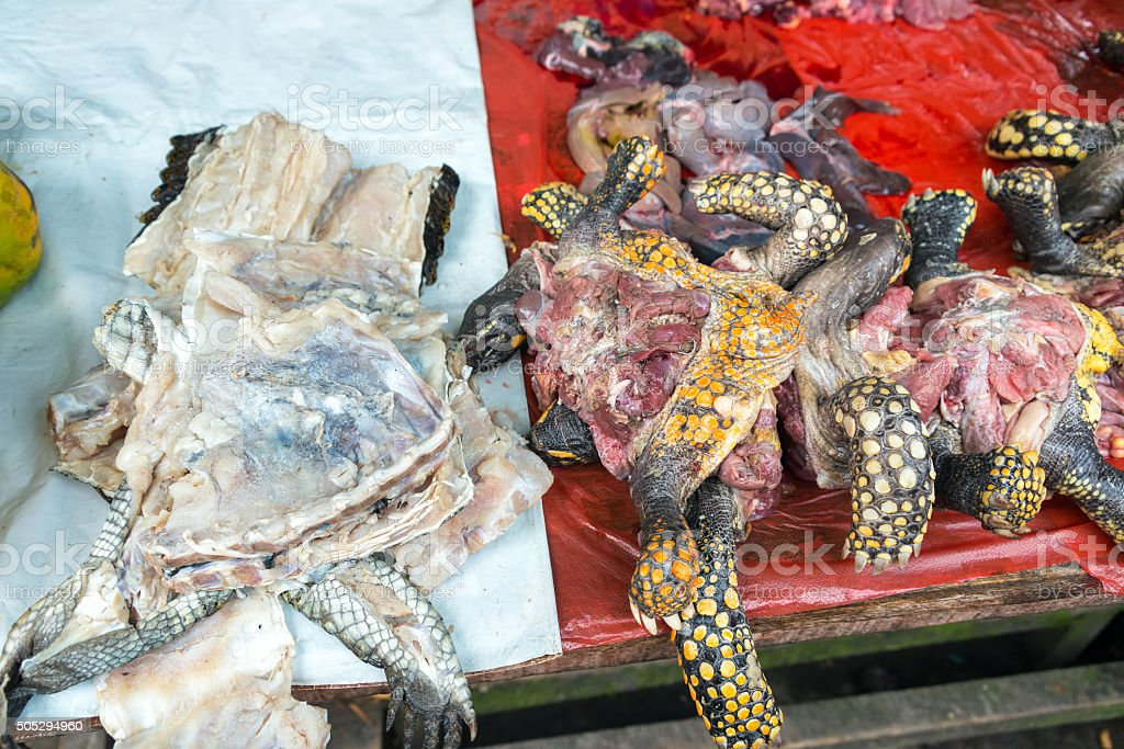 Turtle Meat in a Market in Iquitos, Peru stock photo