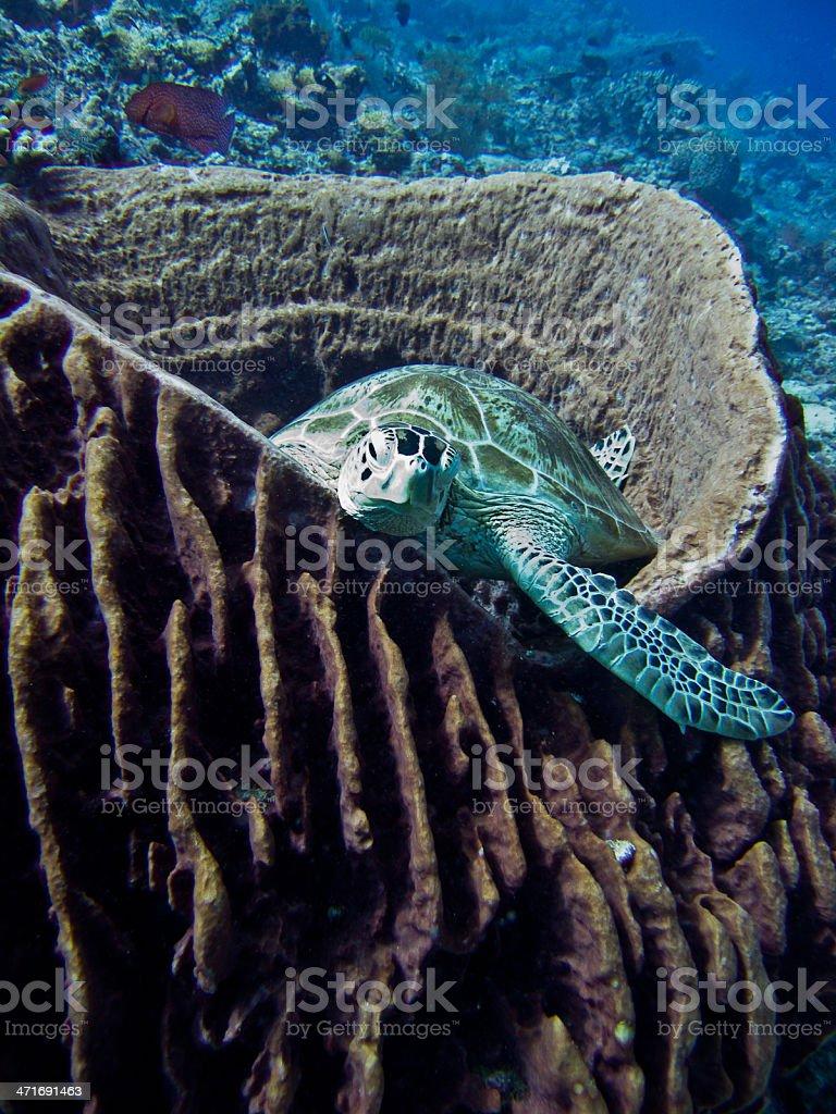 Turtle nap royalty-free stock photo