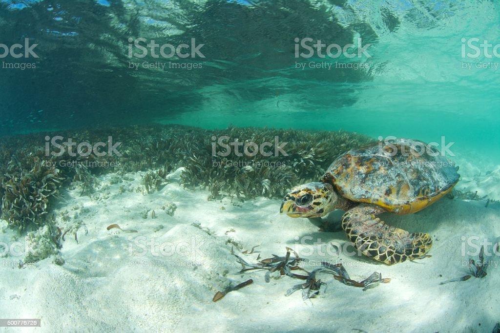 turtle next to seagrass stock photo