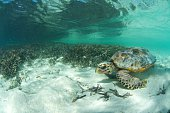 turtle next to seagrass