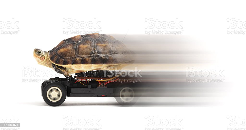 Turtle on a Toy Car stock photo