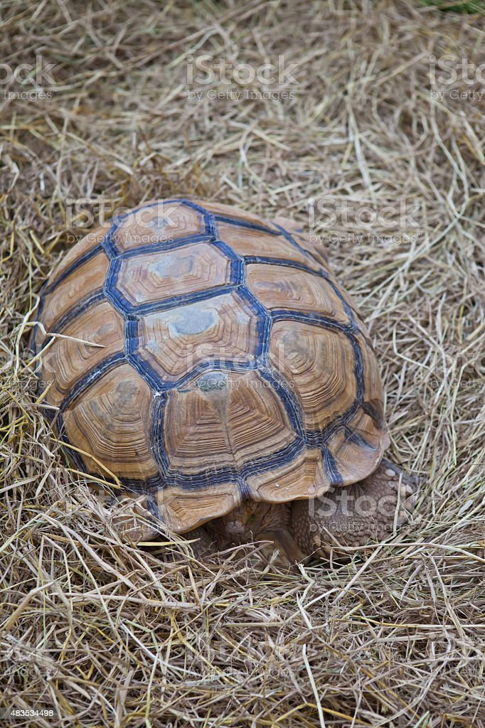 Turtle on dry grass stock photo
