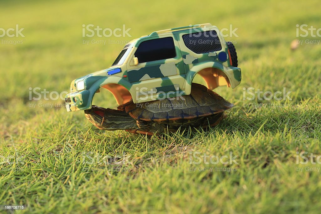 Turtle on Grass with Toy Car royalty-free stock photo