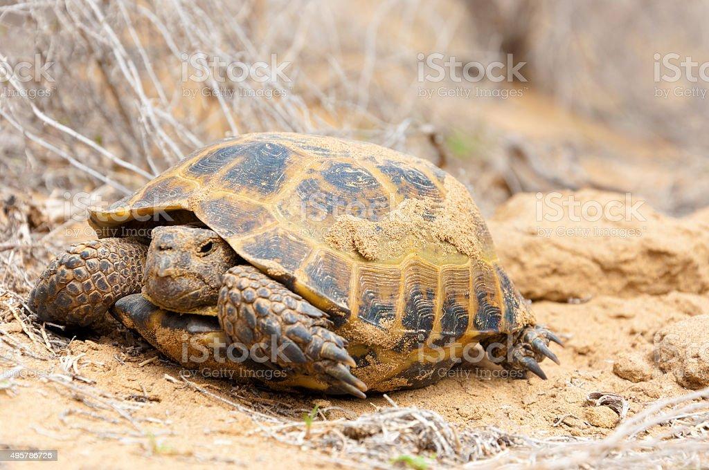 Turtle on nature stock photo