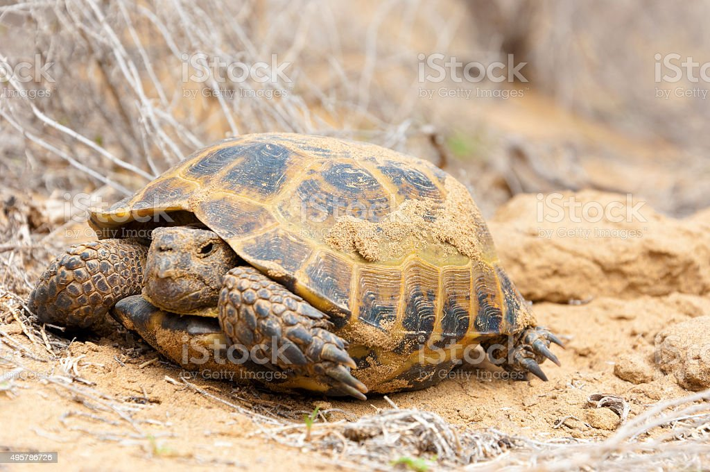 Turtle on nature stock photo