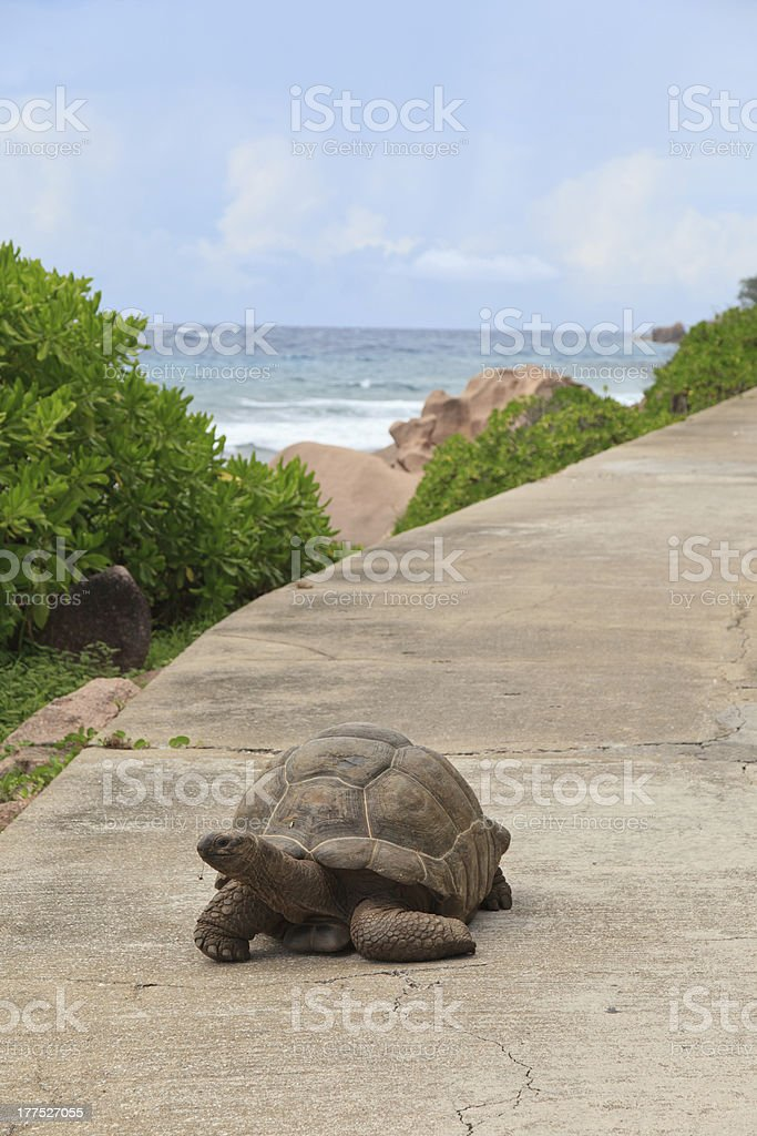 Turtle on road royalty-free stock photo