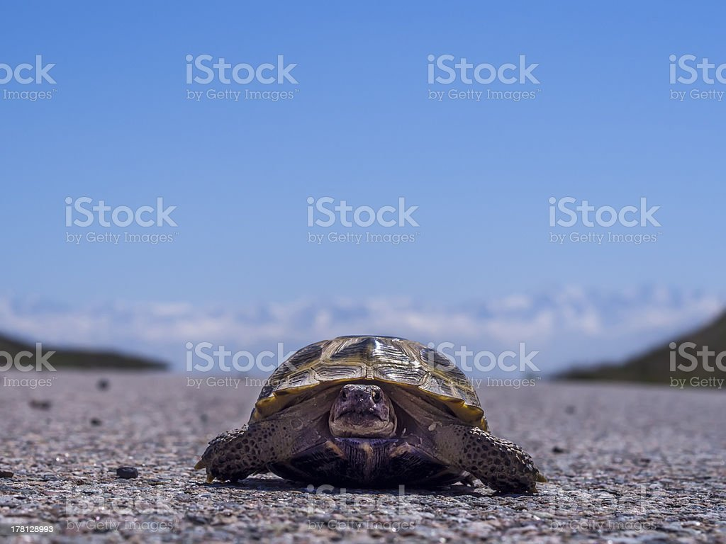 Turtle on the road stock photo
