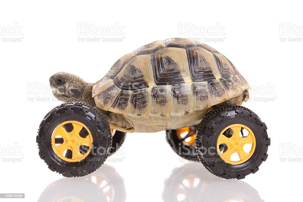 Turtle on the wheel royalty-free stock photo